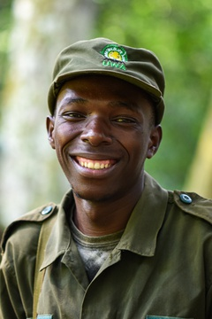 A knowledgeable Uganda Wildlife Authority ranger escorts gorilla tracking groups on each trek.